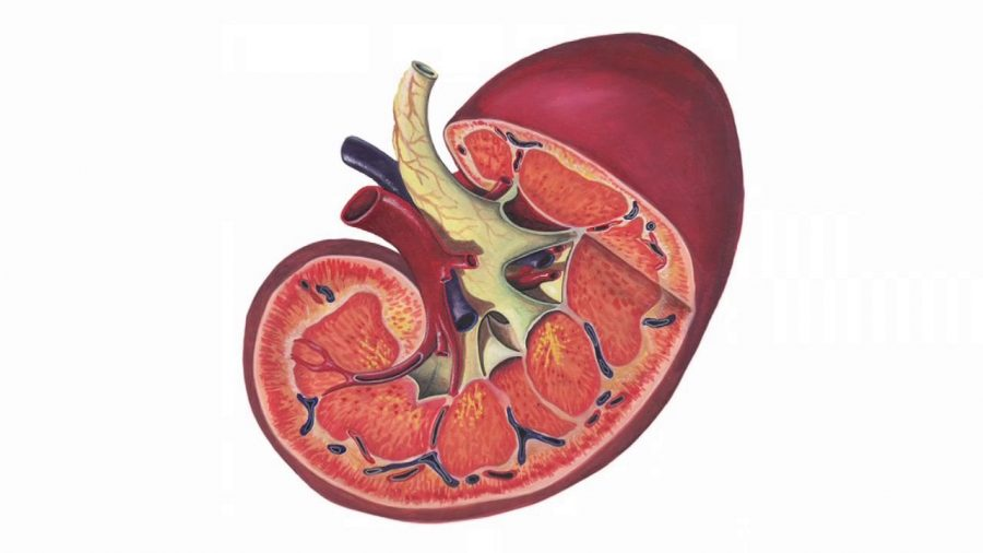What are signs of kidney infection?